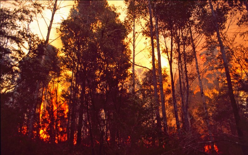 Hopekiller_trees_on_fire