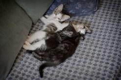 gatinhos-10