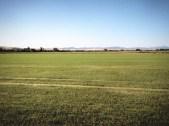 Campo de arroz // Rice fields