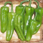 Pepper 'Italian Pepperoncini'