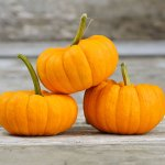 Pumpkin 'Jack Be Little'