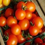 Tomato 'Sungold'