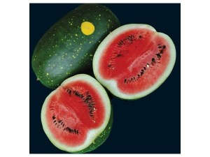 Melon 'Moon and Stars'