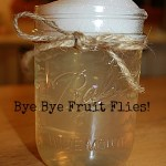 Homemade Natural Fruit Fly Trap