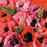 Poppy, Oriental 'Fruit Punch'