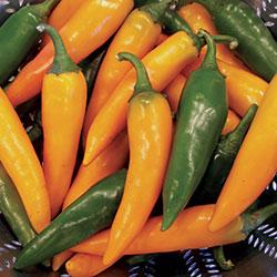 Pepper 'Bulgarian Carrot'
