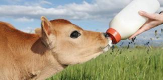 Calf Milk Replacer