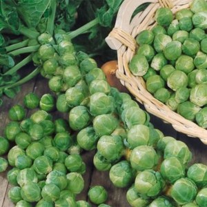 Brussels Sprouts - Long Island