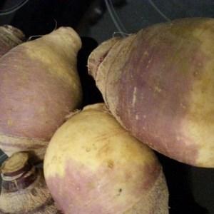 Rutabaga - Joan | Organic |