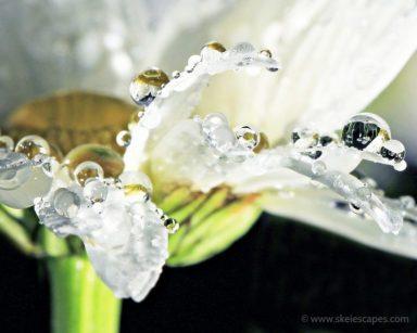 Rain on a daisy