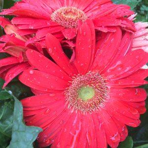 hot pink flower