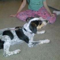 Hallie - Adopted!