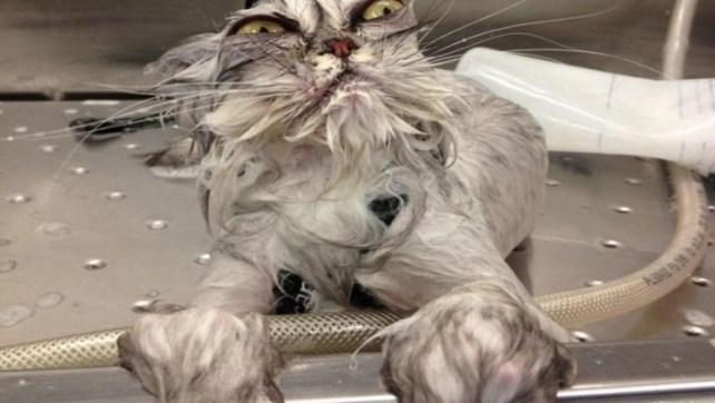 20 x Grumpy Cats