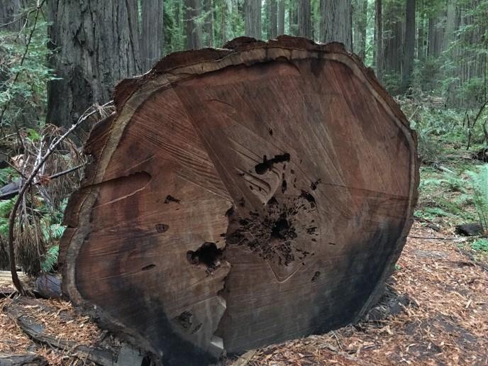 Oregon Redwood Forest