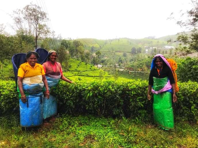 Tea-pickers of Nuwara Eliya