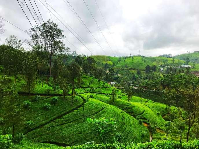 Nuwara Eliya Tea Plantations