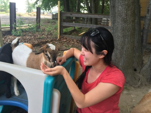 Baby goats at Smiling Hill Farm!