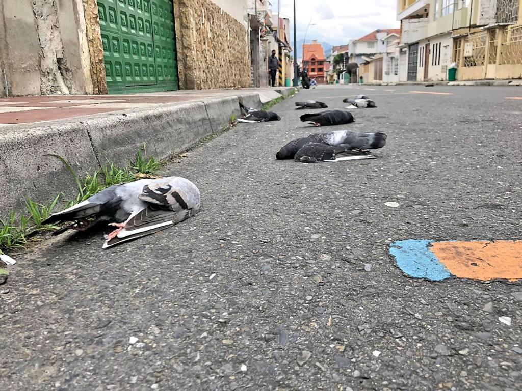 Los animalitos quedaron sin vida en el asfalto, ante la atónita mirada de moradores de la calle Pasaje Sinchona.
