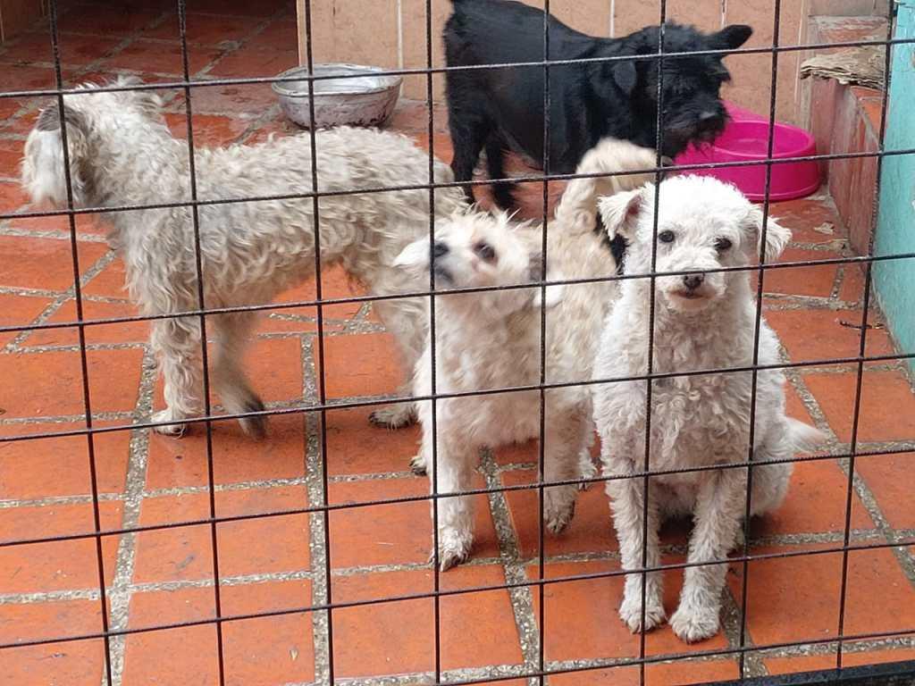 Cada día se presentan denuncias de abandono, maltrato y muerte contra mascotas.