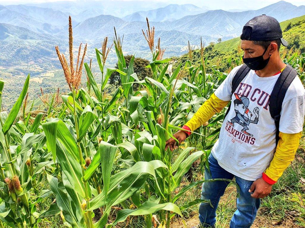 El maíz es uno de los granos que más se considera para la venta.