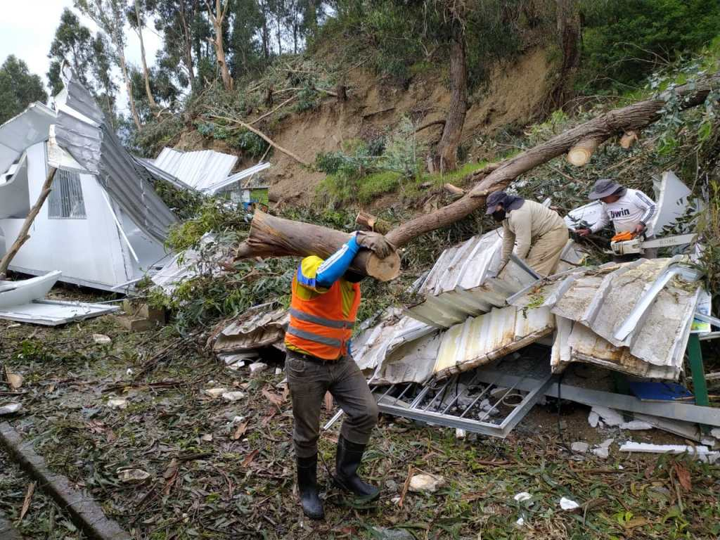 Obreros municipales estuvieron en el plantel realizando el corte del árbol para retirarlo en partes.