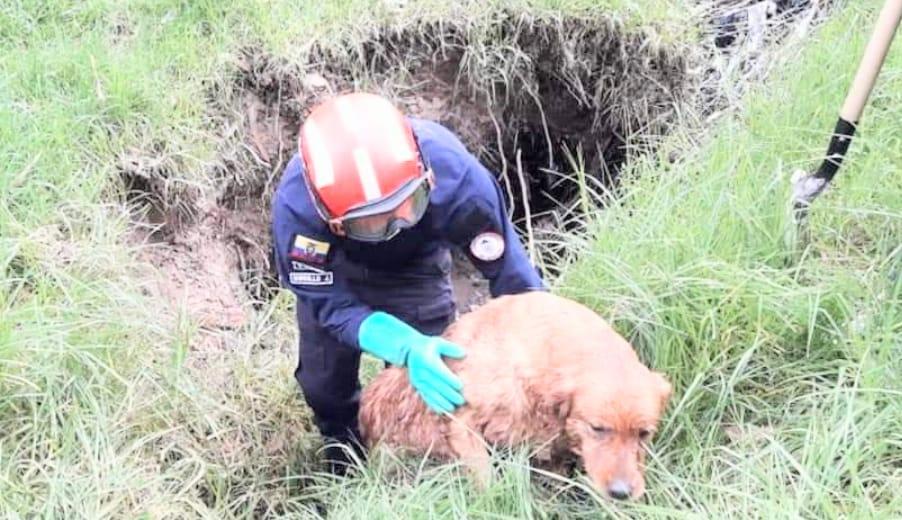La perrita lamió al bombero como muestra de agradecimiento por rescatarla.