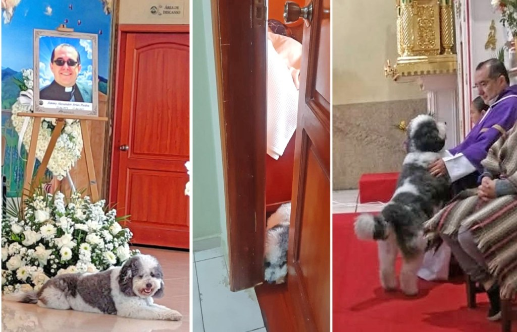 El perrito acompañaba al padre en la iglesia, al momento de la celebración de las eucaristías.
