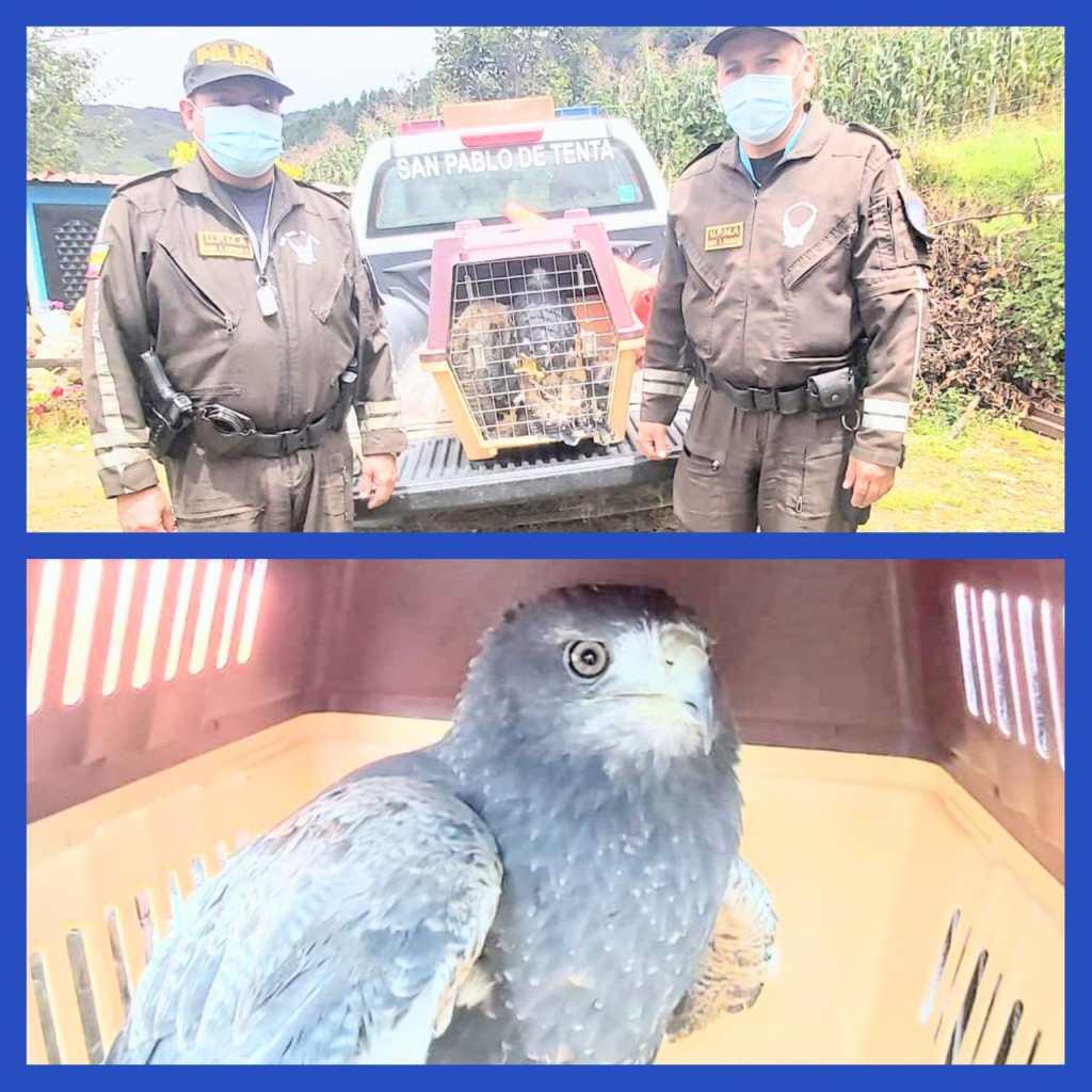 En Saraguro y Cariamanga se localizaron a los animales.