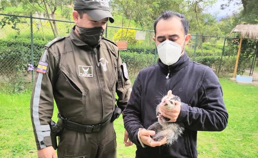 El animalito fue llevado al Bioparque 'Orillas del Zamora'.