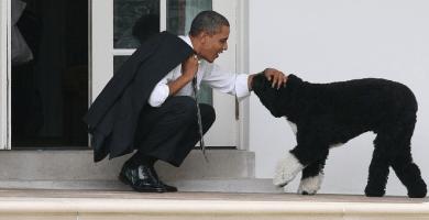 Muere Bo el perro de Barack Obama informo en Twitter – RIP Bo Obama