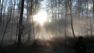 wald-licht