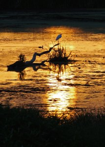 Sunset at the Horicon Marsh