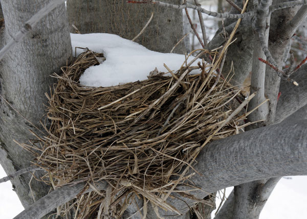 Bird Nest at the Horicon Marsh