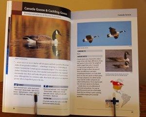 Waterfowl of Eastern North America
