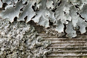 Lichen at the Horicon Marsh