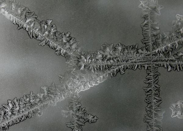 Frost near the Horicon Marsh
