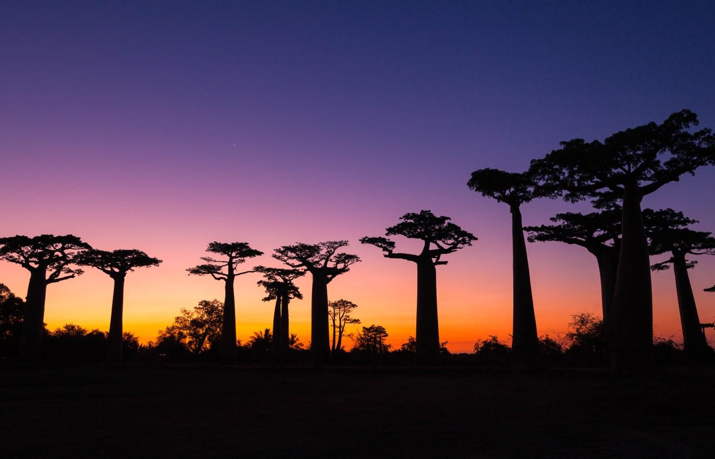 Baobab Avenue,Morondava,Madagascar