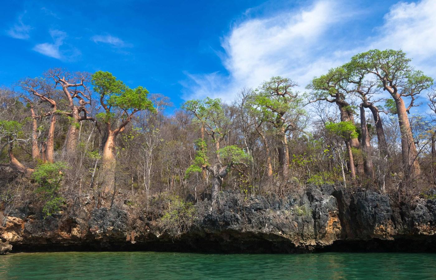 Baobab Island,Moramba Bay,Madagascar