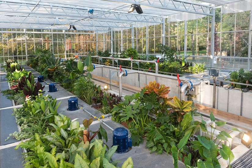 In the Netherlands, researchers are re-using wastewater from a brewery by treating it through an engineered ecosystem. Image credit - Christos Makropoulos
