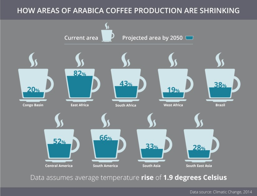 How areas of arabica coffee production are shrinking