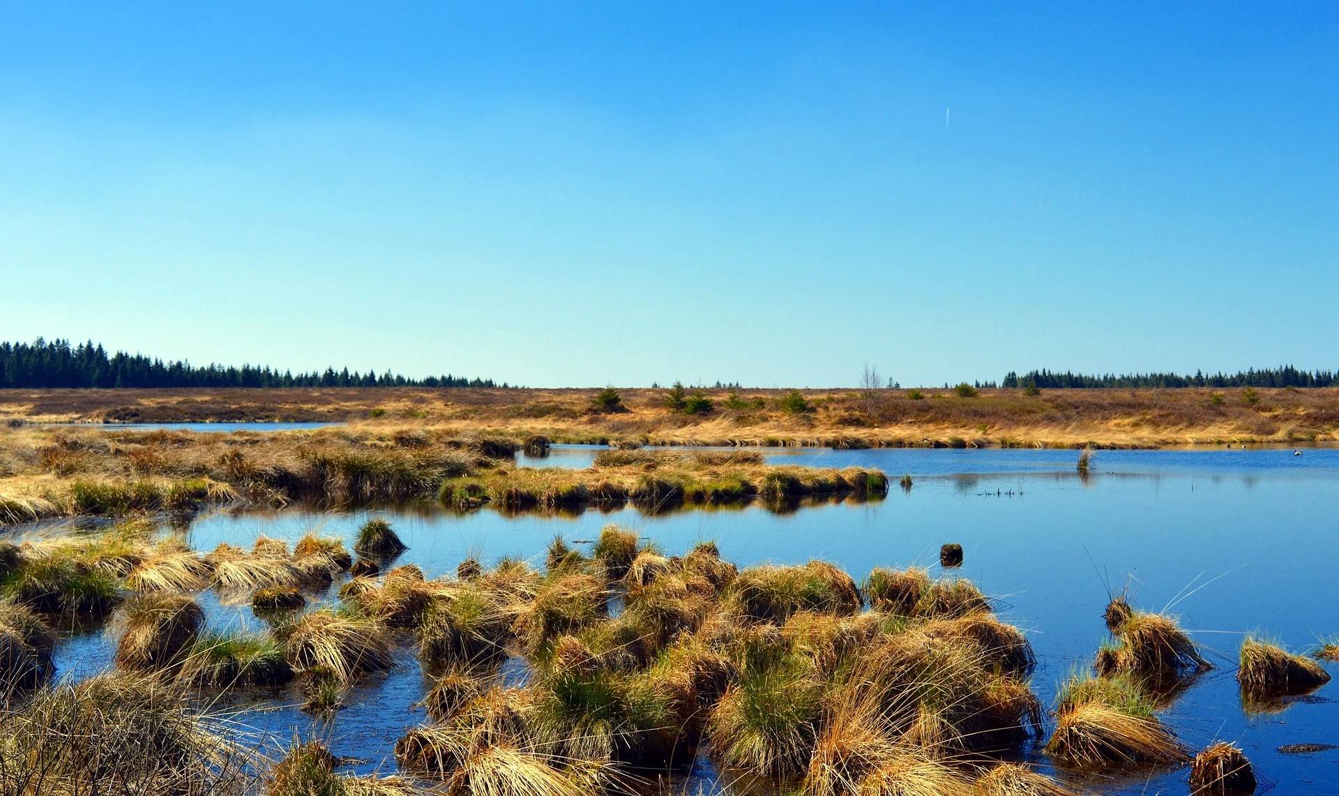 Peatlands occupy roughly 2% or 3% of the land's surface but we don't know how deep they go. Image credit - Marisa04/ Pixabay