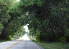 horizonmix6t-ocala-forest1