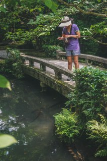 At one of the temples there was a massive garden with this bridge. Here Abby is saying hello to some giant koi fish.