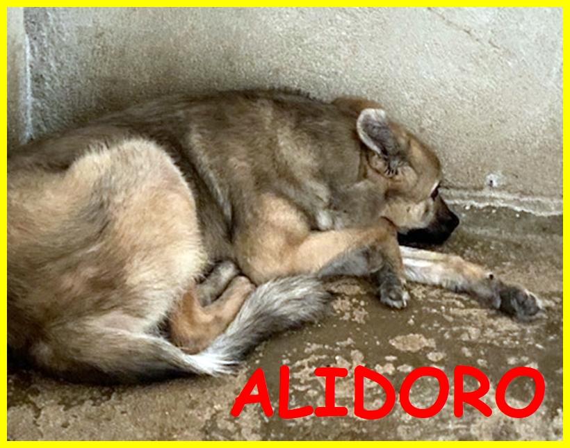 ALIDORO cucciolone 1 anno adozione d'amore pietrificato dalle sue paure