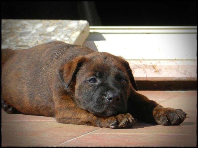 ER ROSCIO, 2 mesi, cucciolo picciotto, in adozione.