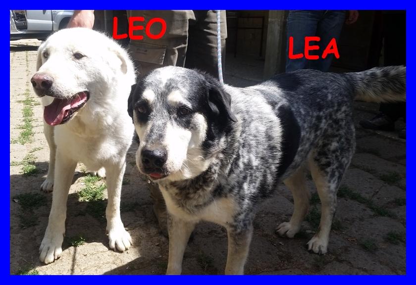 LEO E LEA una vita di privazioni e poi li buttano via
