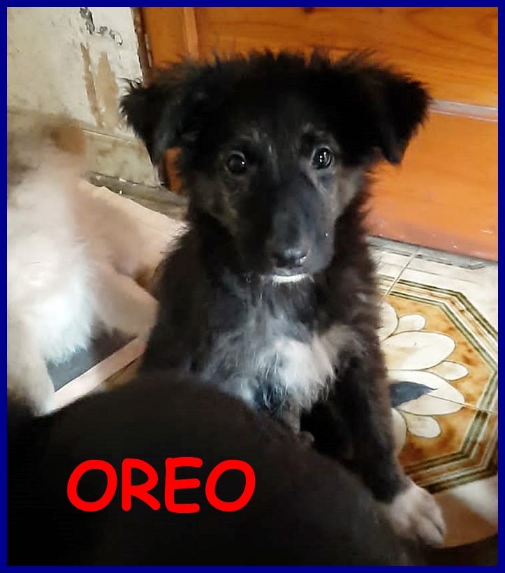 OREO cucciolotto 4 mesi dolce orsacchiotto in cerca di una mamma