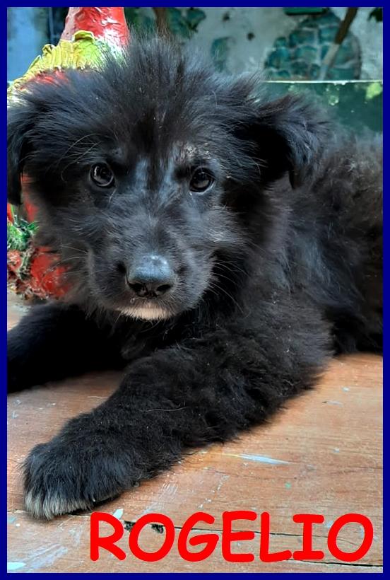 ROGELIO dolce cucciolotto 3 mesi cerca mamma