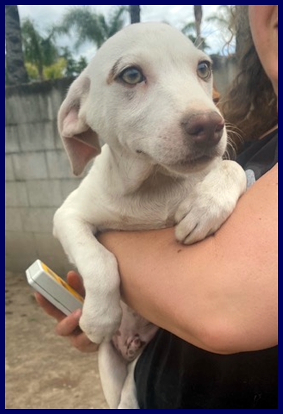 BRUSCOLINO cucciolino 4 mesi in canile aspetta una mamma umana