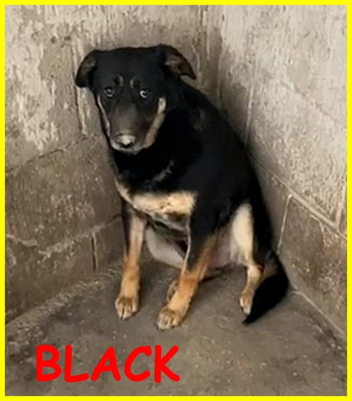 BLACK adozione d'amore cagnolone 5 anni mai uscito dal canile